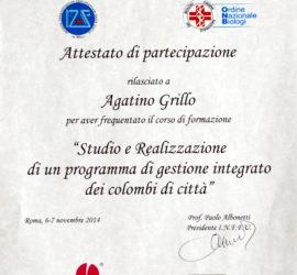 01_Attestato